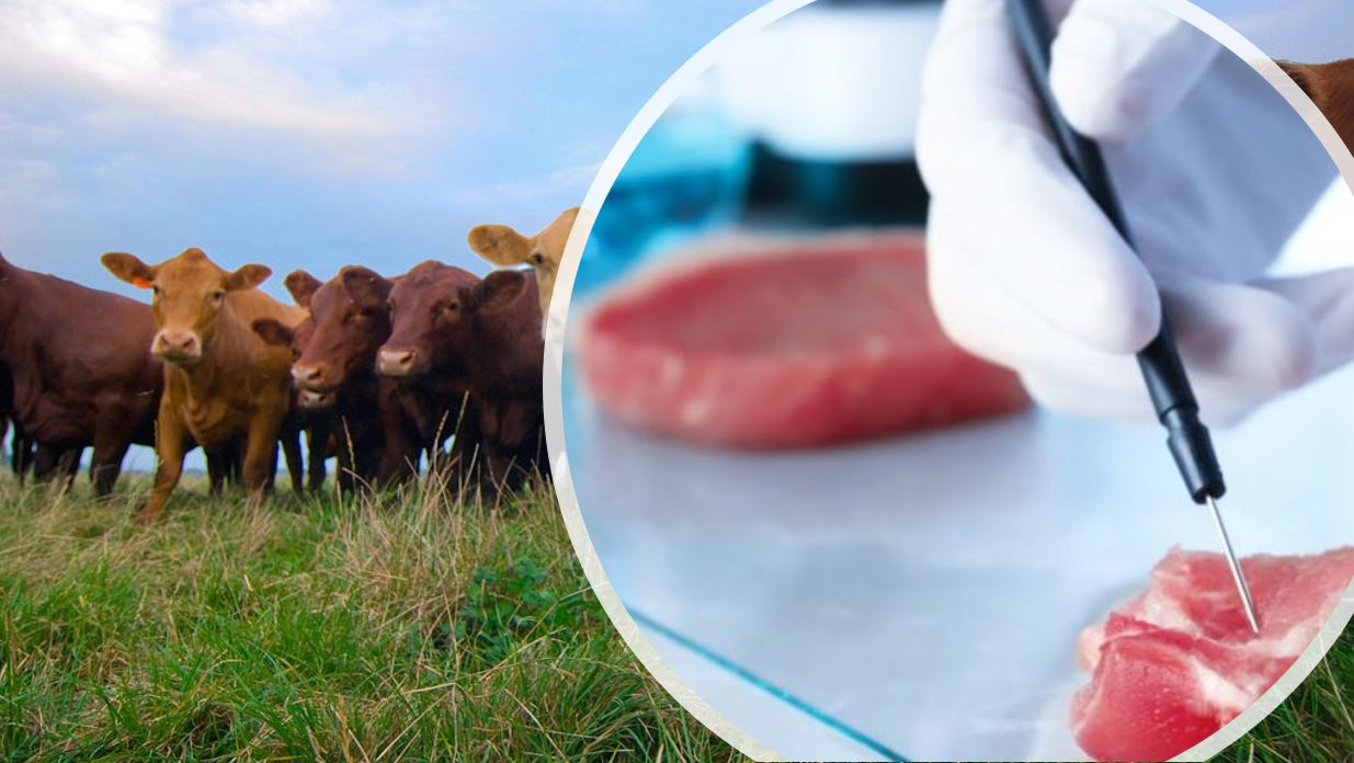 agriland - lab grown meat - environment - agriculture - beef cattle - farming - emissions